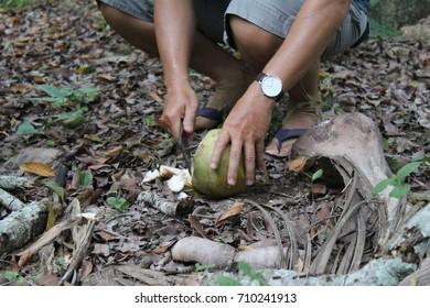 Cutting a coconut
