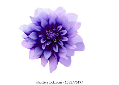 cutting of flower on white background