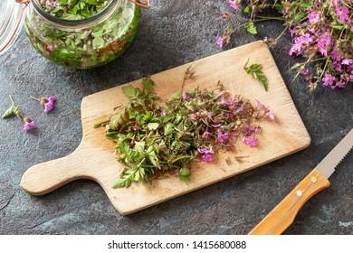 Cutting up fresh herb-Robert, or Geranium robertianum plant to prepare homemade herbal tincture