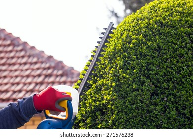 Cutting a hedge with electrical hedge trimmer. Selective focus