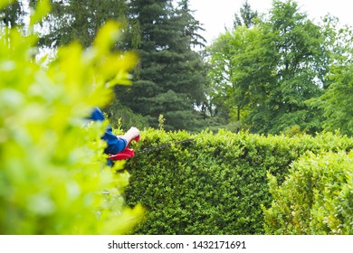Cutting hedge with powertools. Close up