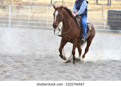 Cutting horse gallops in training arena.
