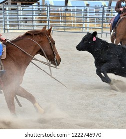 Cutting horse swerves to cut off steer.