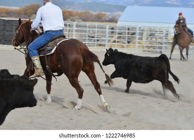 Cutting horse works a cow