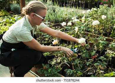 Cutting seedlings flowers