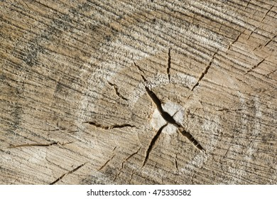Cutting wood annual rings texture background close up
