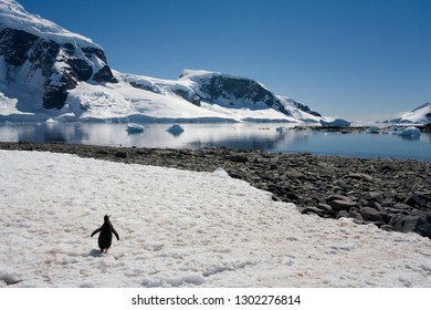 Cuverville Bay on the Antarctic Peninsula in Antarctica.
