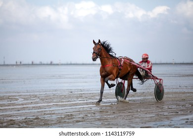 "Cuxhaven, Germany - July 22, 2018: the gelding Uplands Park with equestrian Manfred Walter in sulky trotting across the mud flat to prepare for a harness racing at ""Duhner Wattrennen"""