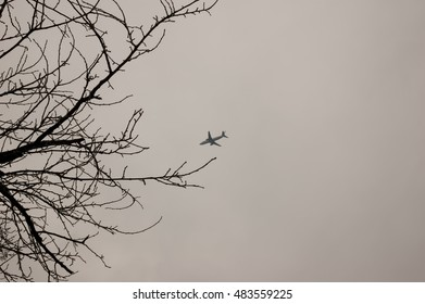 cy branches with plane on the horizon