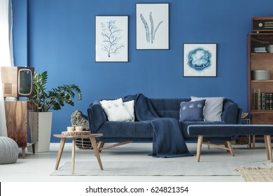 Cyan living room with navy sofa and wooden decoration