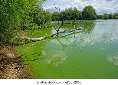 "Cyanobacteria or ""blue-green"" algae, which develop at the surface of a slow flow freshwater rivers/lakes in the Summer, can be harmful to people and animals, Frampton on Severn, Gloucestershire, UK"