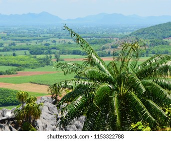 Cycas plant tree / green cycad growing on the rocky - cycad planted on hill or fern tree cycad cobia mountain landscape background