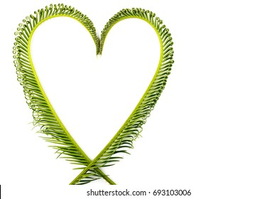 Cycas revoluta Thunb is a leaf that is placed in a heart shape on a white background isolated with copy space