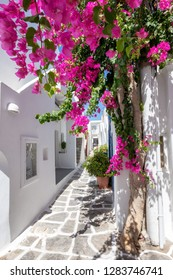 A cycladic, whitewashed alley with colorful flowers at Naousa on the island of Paros, Cyclades, Greece, during summer time