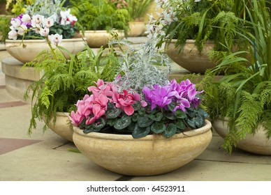 Cyclamen, ferns and orchids in beautiful earthenware pots