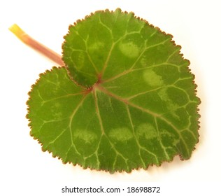 Cyclamen leaf, heart-shaped, tilted, upon a white background