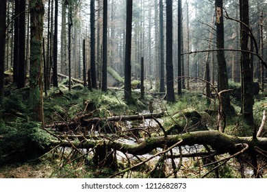The cycle of nature begins in the forest