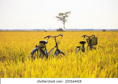 cycles are in the rice fields