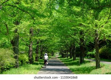 Cycling in fresh green