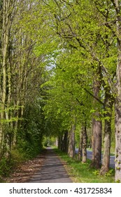 cycling path with high trees