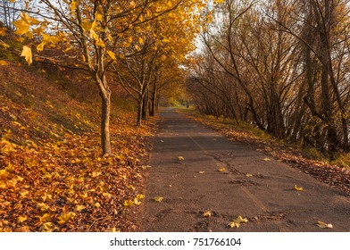 cycling road Zebegeny autumn fall colors riverside Danube