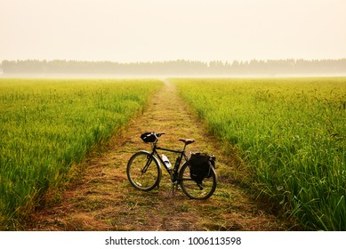 Cycling in rural road filled with paddy fields. When the sun falls, it looks very beautiful.