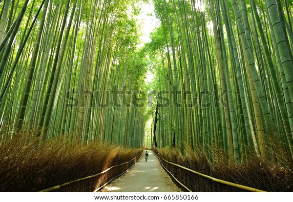 Cycling through bamboo forest.