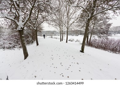 Cyclist Cycling along snow covered path through trees