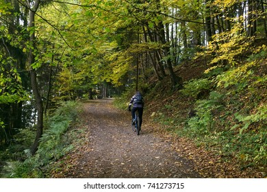 Cyclist in the forest. Slovakia