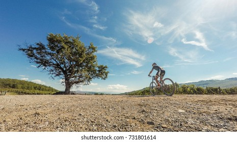 Cyclist near a tree in sunny day