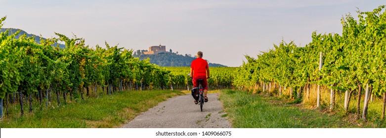 Cyclist on grape mountain. Biking travel tour in Vineyards Palatinate region, German Wine Road, Rhineland-Palatinate, Germany. , banner