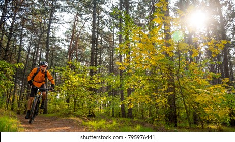 Cyclist in Orange Riding the Mountain Bike on the Trail in the Beautiful Fairy Pine Forest Lit by Bright Sun. Adventure and Travel Concept.