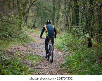 Cyclist practicing mountain bike on a forest trail. The rider is back