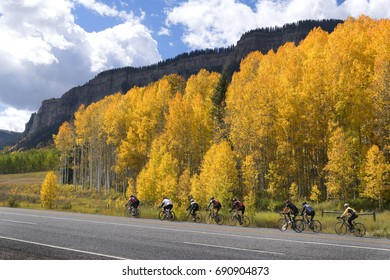 Cyclist ride through the Colorado Rockies and autumn Aspen trees.