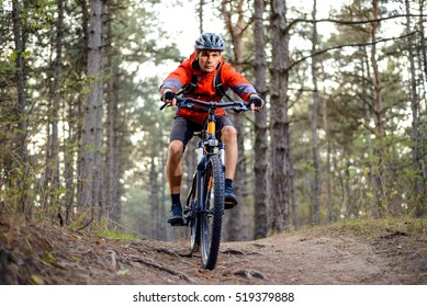 Cyclist Riding the Bike on the Trail in the Forest. Extreme Sport Concept.