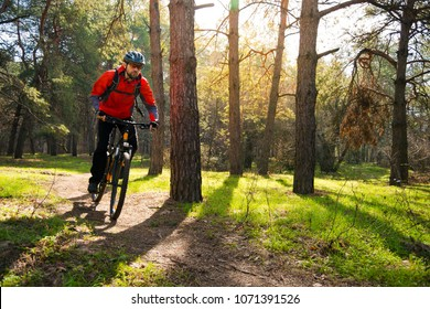 Cyclist Riding the Mountain Bike on the Trail in the Beautiful Pine Forest under the Sun. Adventure and Travel Concept.