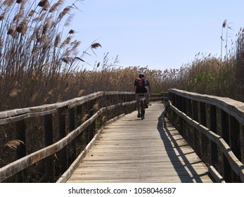 Cyclist using an accessible rustic wooden path that passes through the tall reeds and bullrushes along the coast of the Mar Menor, Spain.