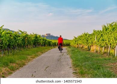 Cyclist in vineyard, German summer landscape. Vineyards Palatinate region, Hambach Castle, German Wine Road, Rhineland Palatinate, Germany