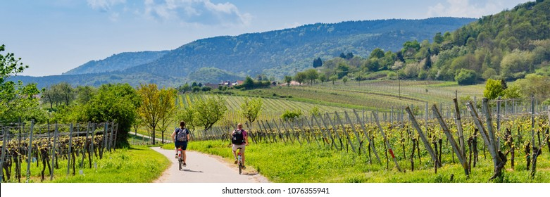 Cyclists on grape mountain.  Biking travel tour in Vineyards Palatinate region, Deutsche Weinstrasse (German Wine Route), Rhineland-Palatinate, Germany. Banner