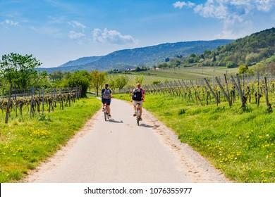 Cyclists on grape mountain.  Biking travel tour in Vineyards Palatinate region, Deutsche Weinstrasse (German Wine Route), Rhineland-Palatinate, Germany
