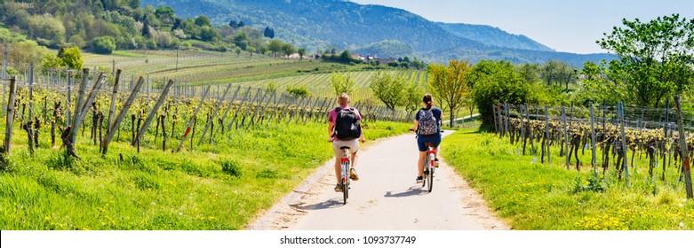 Cyclists on grape mountain.  Biking travel tour in Vineyards Palatinate region, Deutsche Weinstrasse (German Wine Route), Rhineland-Palatinate, Germany. Banner