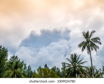 Cyclone or heavy storm weather with massive clouds forming in the sky. Palm tree and tropical forest in foreground.