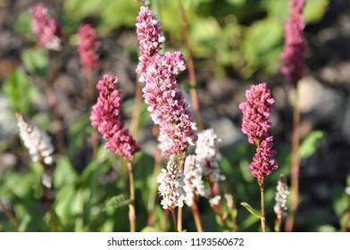 Fleece Flower Images Stock Photos Vectors Shutterstock