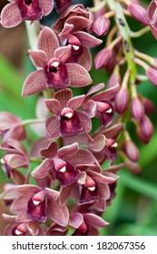 Cymbidium  orchid gainst tropical greens