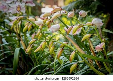 Orchid Christmas Tree.Imagenes Fotos De Stock Y Vectores Sobre Christmas Orchid