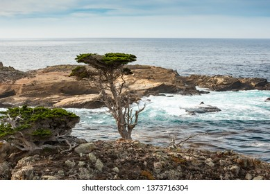 Cypres tree on a rocky point viewed from the Cypress grove trail in Point Lobos State Park on central coast of California.