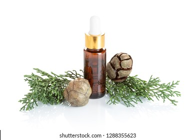 Cypress essential oil isolated on white background. Cypress oil on bottle for beauty, skin care, wellness. Alternative medicine