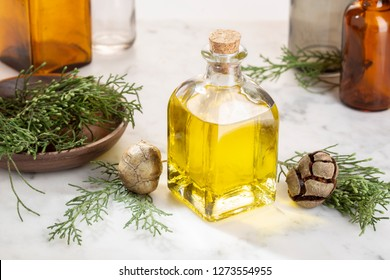 Cypress essential oil. Cypress oil on glass bottle for beauty, skin care, wellness. Alternative medicine