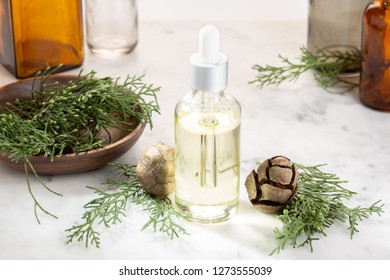 Cypress essential oil. Cypress oil on glass bottle with dropper for beauty, skin care, wellness. Alternative medicine