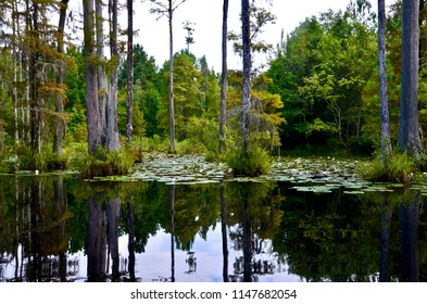 Cypress Gardens in Moncks Corner in South Carolina